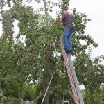 r-west-lbp-obstbaumschnitt (5)
