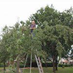 r-west-lbp-obstbaumschnitt (7)