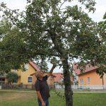 r-west-lbp-obstbaumschnitt (1)