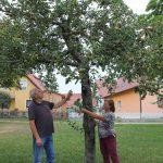 r-west-lbp-obstbaumschnitt (2)